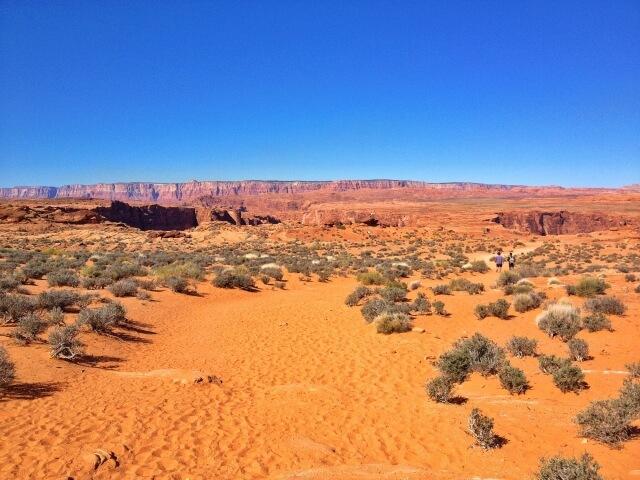 暑さや乾燥に強く砂漠地帯の過酷な環境でも水分を保持て生息するホホバ
