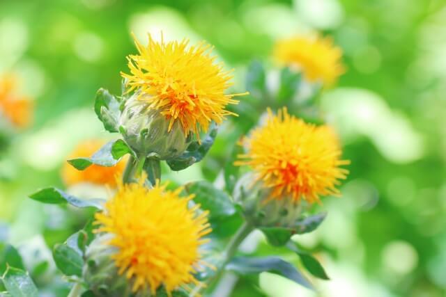強力な抗酸化作用を持つファイトケミカルは植物由来の化学成分