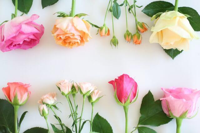 植物の色と香りを生み出しているファイトケミカル