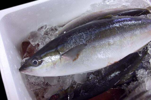 魚の鱗から抽出されるフィッシュ(マリン)コラーゲン