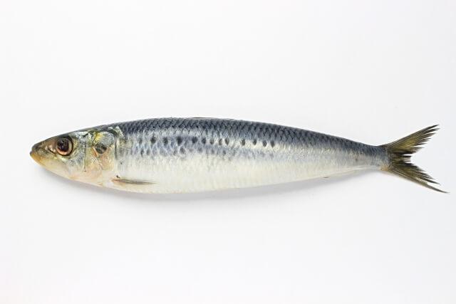 魚の皮から抽出されるフィッシュ(マリン)コラーゲン