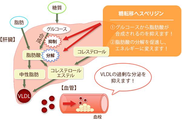 中性脂肪の合成を抑制・予防する効果