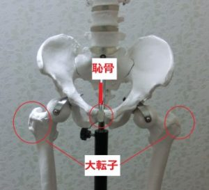 骨盤解説・位置図